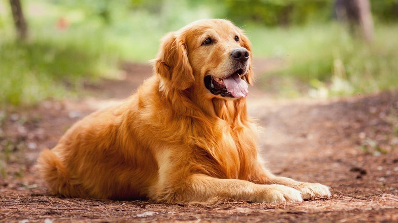 ТОП-4 найкращих порід собак для дітей