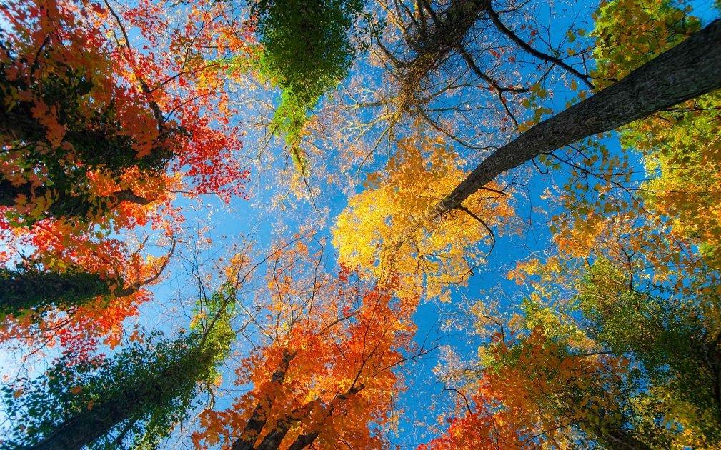 Праздник 30 октября: в день пророка Осии можно встретить свою судьбу