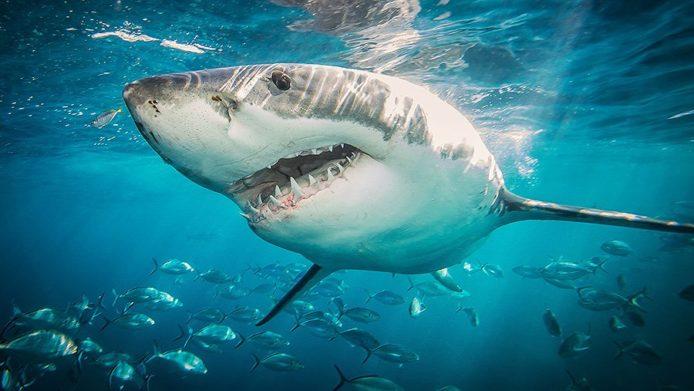 З Єгипту повідомили подробиці нападу акули на туристів з України