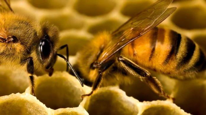 Мед: как правильно его выбрать и какие опасности может таить излюбленный продукт