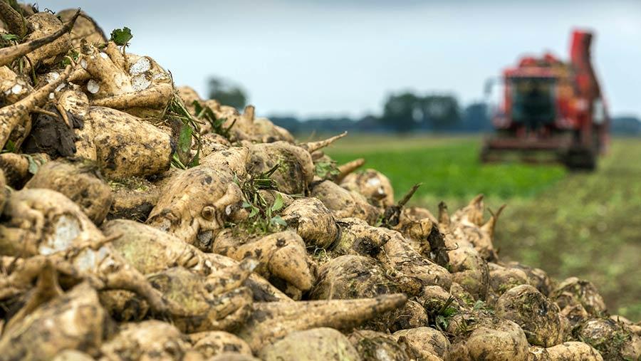 Буде несолодко: в Україні сильно подорожчає цукор, - експерт