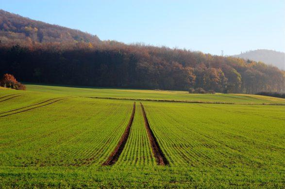 Рынок земли: украинцам сообщили стоимость гектара по опыту первого месяца продаж - today.ua