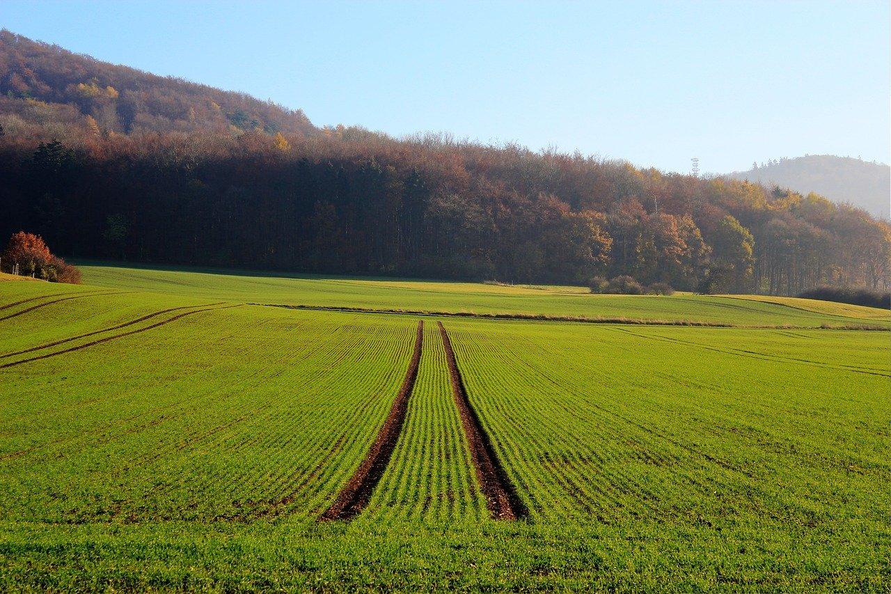 Рынок земли в Украине: почем будет гектар отечественного чернозема уже в этом году