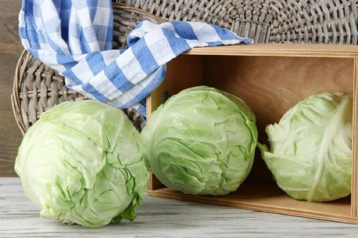 Квашена капуста цілими качанами: секрети смачної і простої заготовки для голубців і салатів