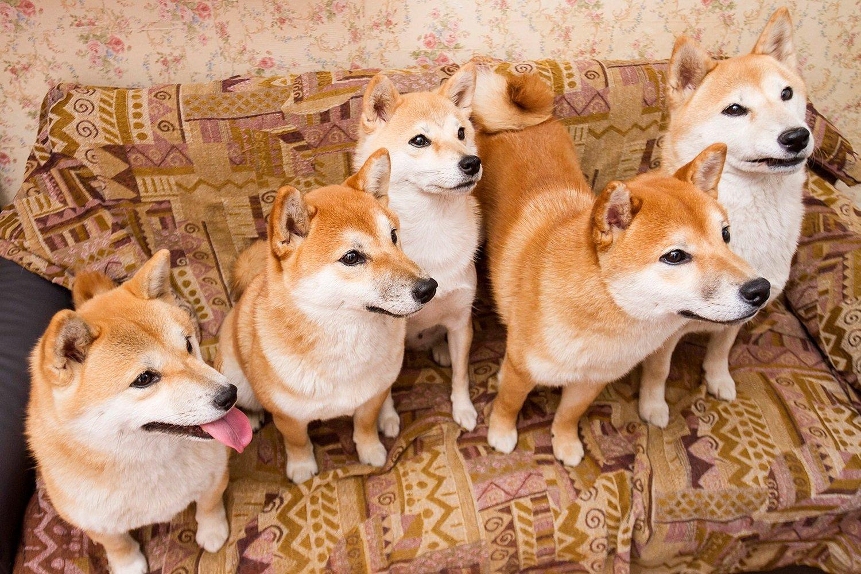 Топ-5 пород собак для ленивых хозяев-домоседов