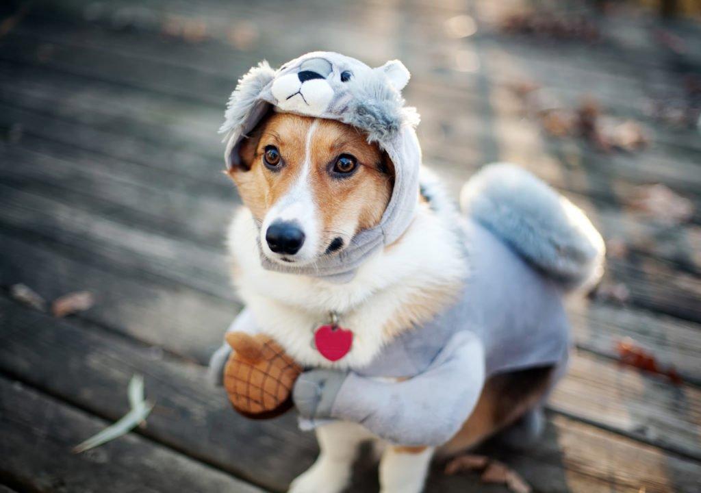 Названі породи собак, які бояться холоду і мерзнуть навіть у квартирі