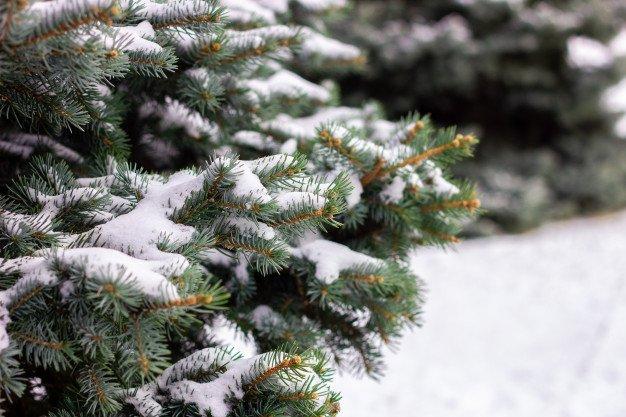 Прогноз погоди на Різдво в Україні: синоптики розповіли, чи чекати снігу