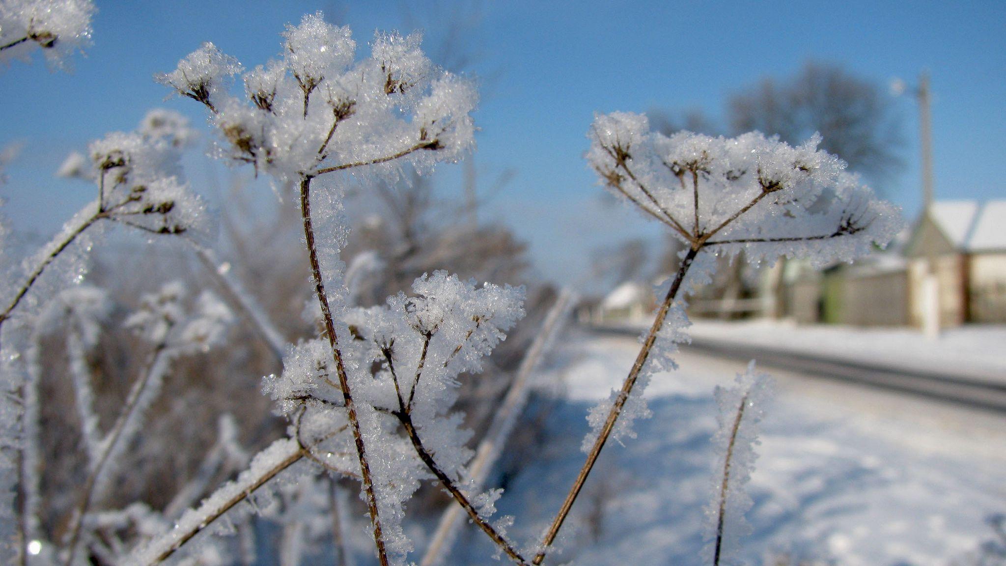 Грудень ударить по Україні морозом до -26: в яких областях буде найлютіший холод