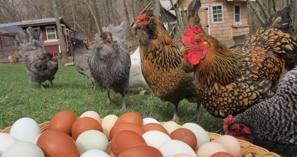 У прийдешньому році ціни вдарять по яйцях: популярний продукт птахопрому стане дорожчим
