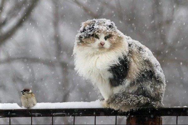 В Украину идет страшный холод: прогноз погоды от Наталки Диденко