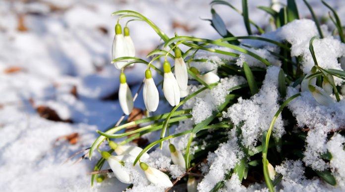 Прогноз погоды на март в Украине: синоптики прогнозируют продолжение теплой зимы с дождями - today.ua