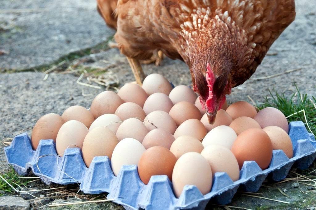 В Украине резко выросли цены на яйца: десяток стоит от 40 до 60 гривен