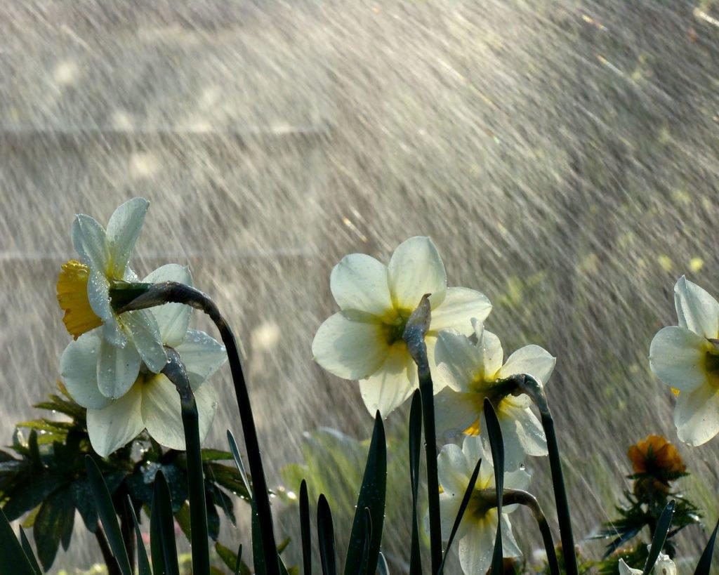 Синоптики передбачили погоду до кінця весни: у квітні вдарять морози, а травень буде дощовим