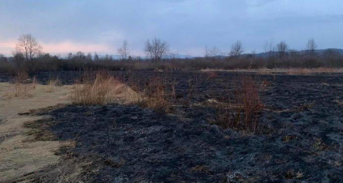 На Закарпатье дотла сгорела известная Долина нарциссов