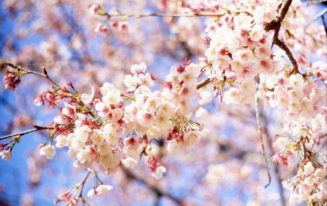 В апреле в Украину вернутся морозы: погода будет меняться каждые пять дней