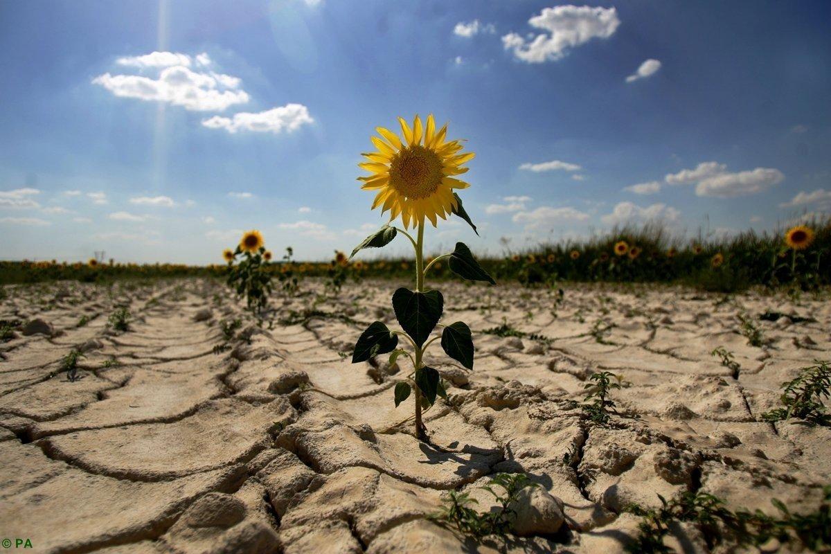 Рекордна спека і посуха: прогноз погоди на літо 2021
