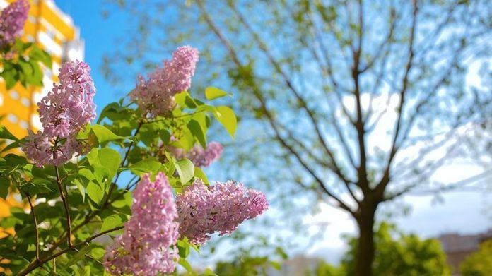 Погода в травні 2021: синоптики обіцяють українцям стабільне потепління