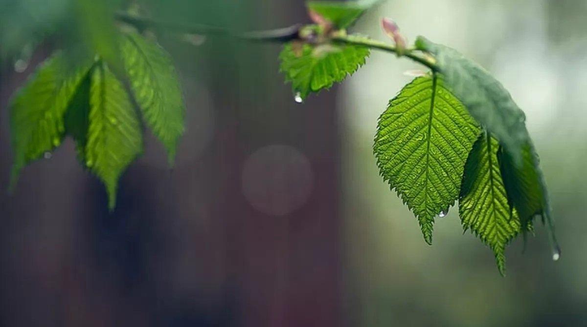 Прогноз погоды на майские праздники: в Украину идет потепление, некоторые области зальют дожди