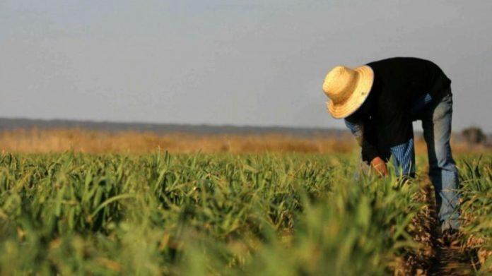 В Україні обкладуть податками селян, які самі обробляють землю і вирощують продукцію - today.ua