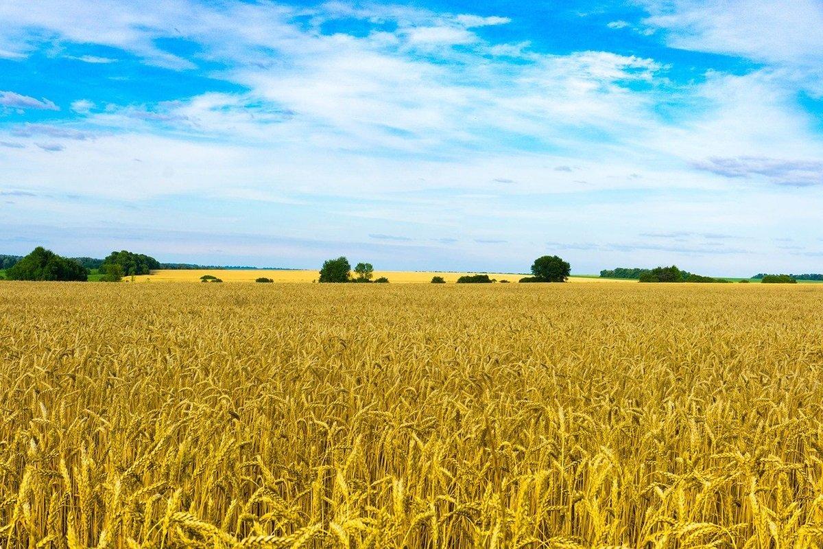 В Минагрополитики рассказали, как украинцы могут получить бесплатно 2 га земли