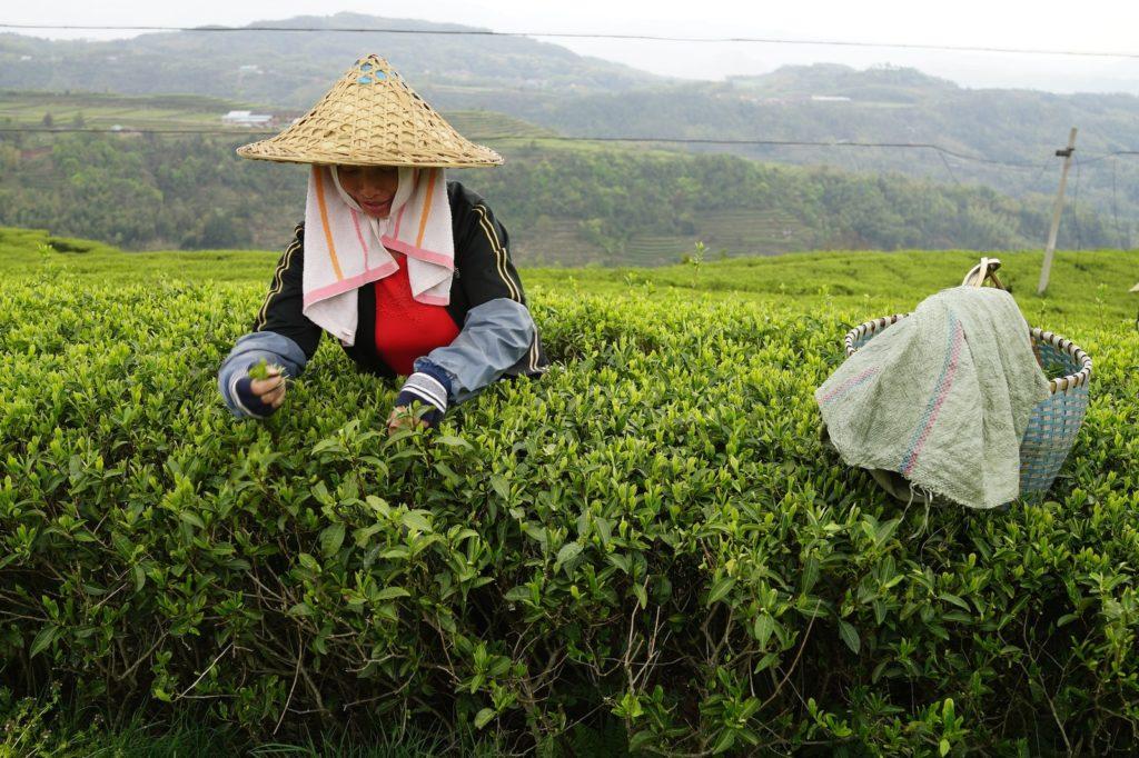 В Украине подорожает чай из-за прекращения поставок из Индии