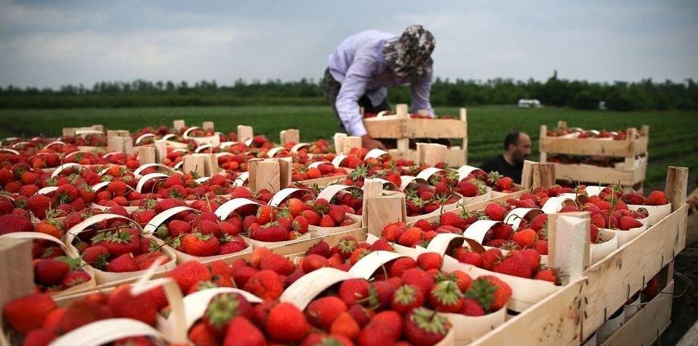 Заробітчани - в гострому дефіциті: польські підприємці скаржаться, що їхній бізнес руйнується
