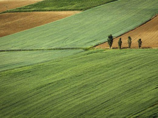 В Украине подорожала аренда земли: сколько стоит гектар в регионах - today.ua
