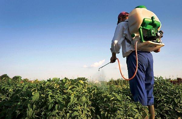Як вберегти врожай картоплі від колорадського жука: корисні поради для дачників