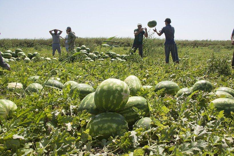 Часть урожая не соберут: из-за цены на ягоды фермеры решили их оставить на корню