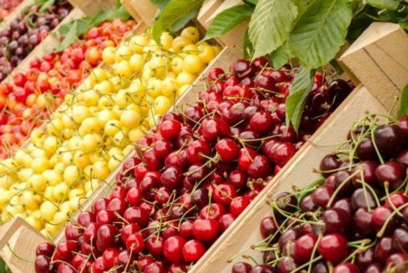 В Украине рекордно низкий урожай черешни: импортные ягоды стоят дешевле   - today.ua