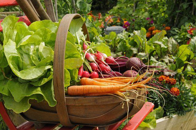 Як зменшити вміст нітратів у сезонних овочах, і чому вони небезпечні