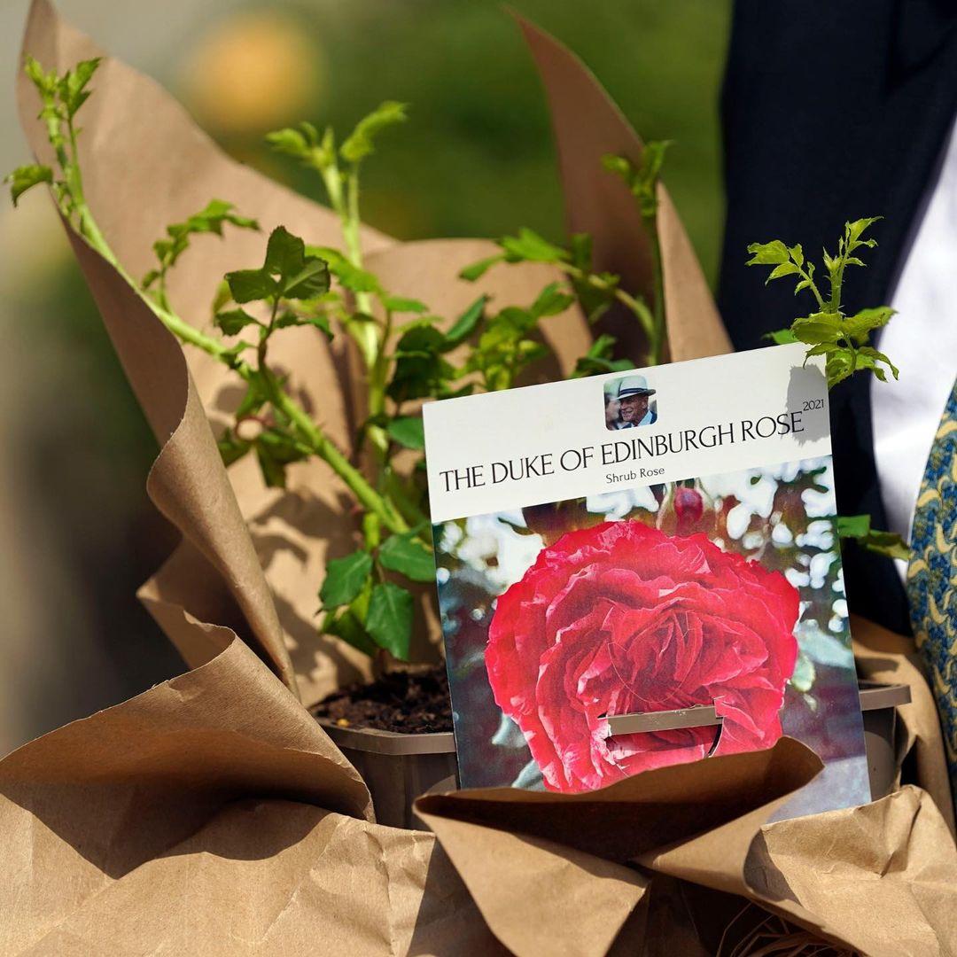 Єлизавета II в квітковому вбранні посадила новий вид троянд в пам'ять про покійного чоловіка