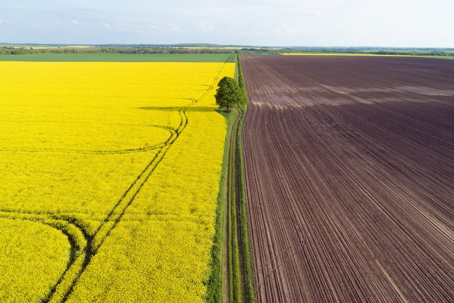Земля в Україні щорічно буде дорожчати на 10%: міністр агрополітики закликає не продавати ділянки