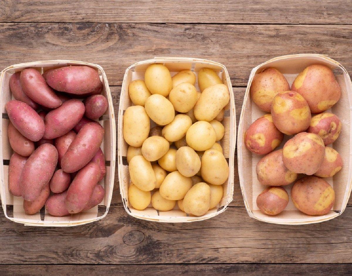 Урожай картофеля погибает на полях: цены на популярный овощ кардинально изменятся