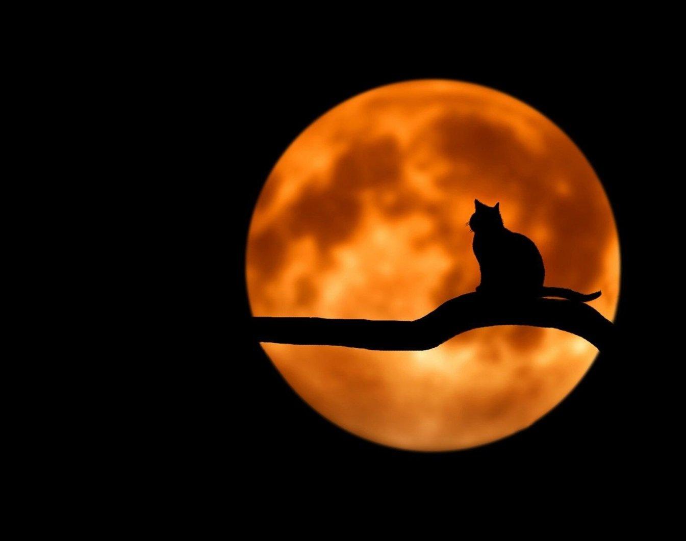Золотая Луна 2021: украинцам рассказали, когда произойдет роковое июльское полнолуние