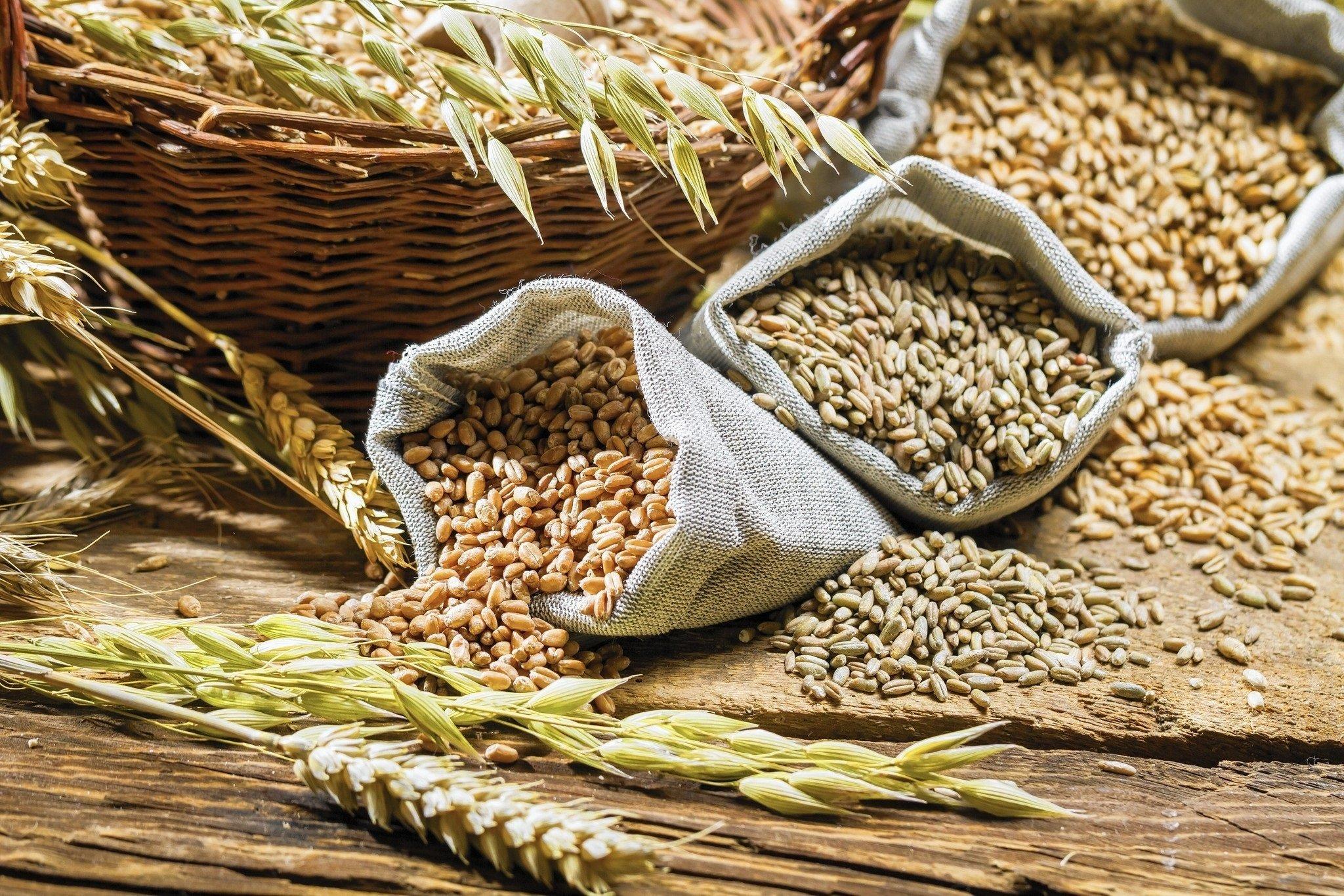 Спека та дощі знищили частину врожаїв пшениці в Україні: як зміняться ціни на зерно