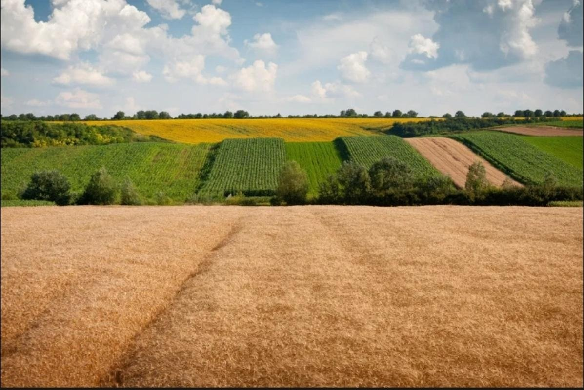 В Україні посилять вимоги до продажу землі юрособам