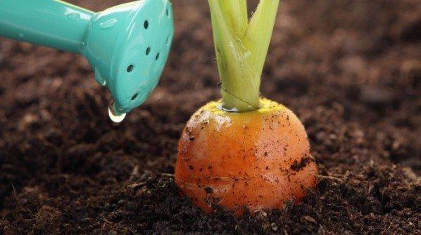 Как правильно поливать овощи и фрукты на огороде в 35-градусную жару