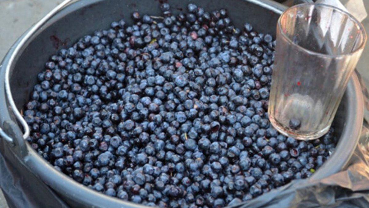 На рынках Украины стартовал сезон черники: где и за сколько продают первые ягоды