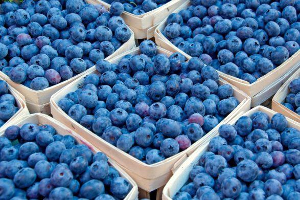 На рынках Украины стартовал сезон черники: где и за сколько продают первые ягоды  - today.ua