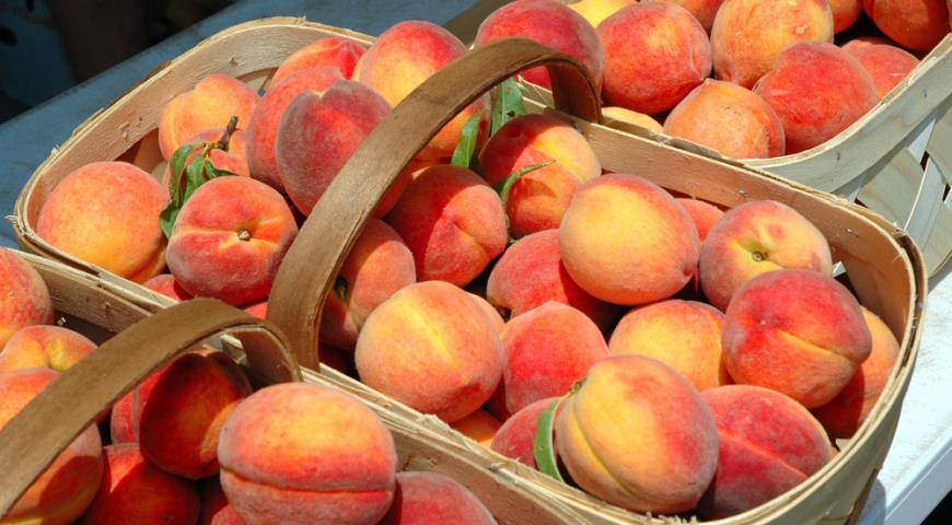 В Украине в этом году уродили персики: за сколько можно будет полакомиться сочным фруктом