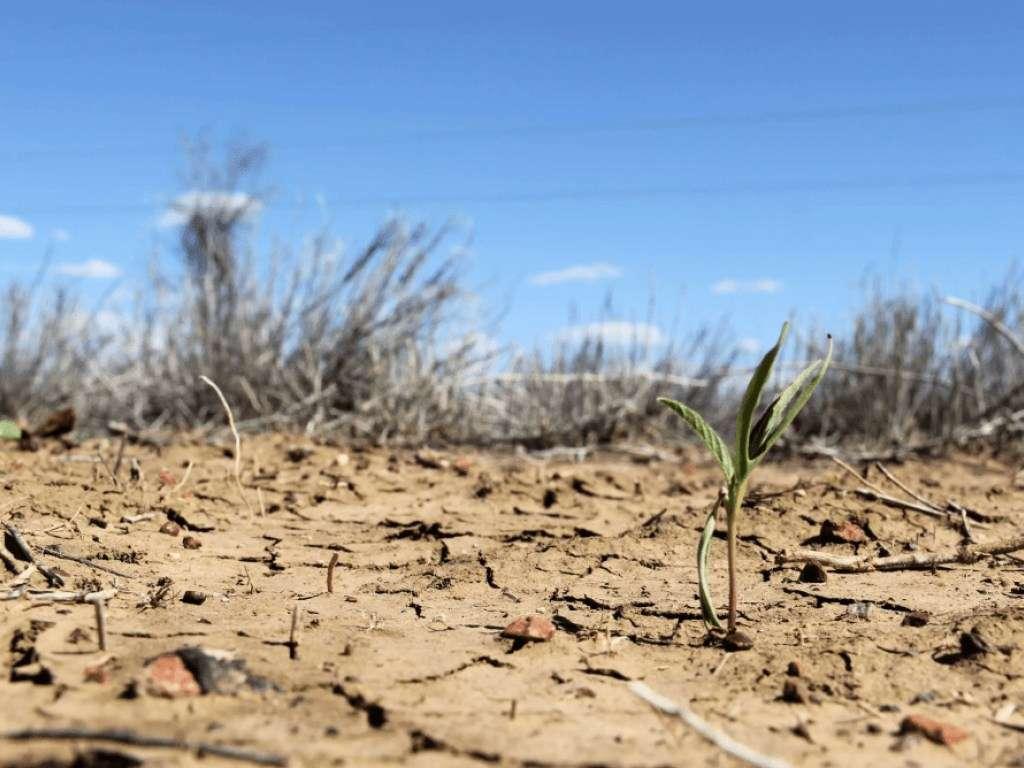 Спека в Україні продовжить бити рекорди: синоптики розповіли про періоди посухи