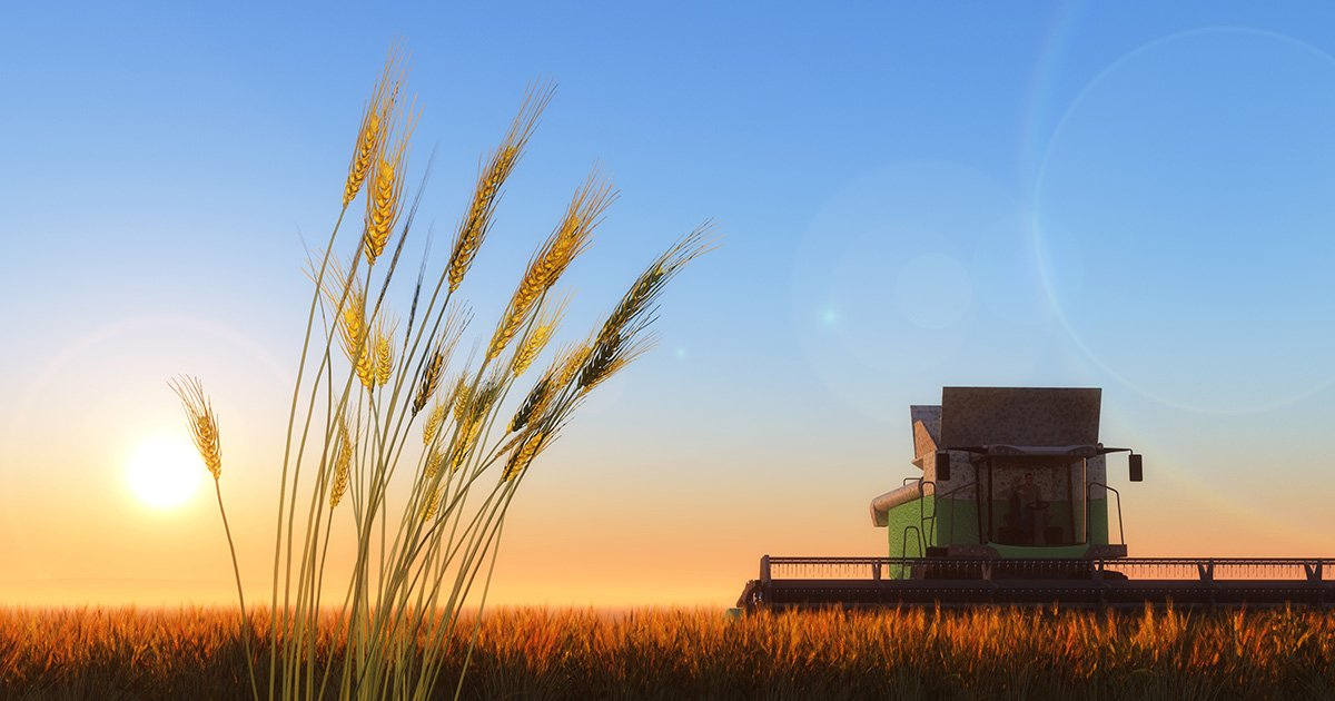 Земля в Украине может стать опасной для земледелия: тревожный прогноз для фермеров