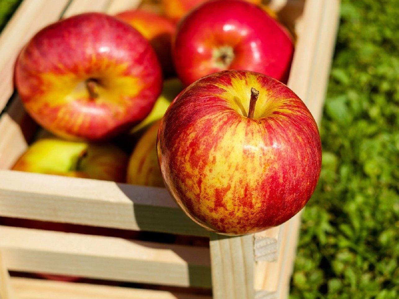 Повернуться ціни 2019 року: в Україні восени подешевшають яблука