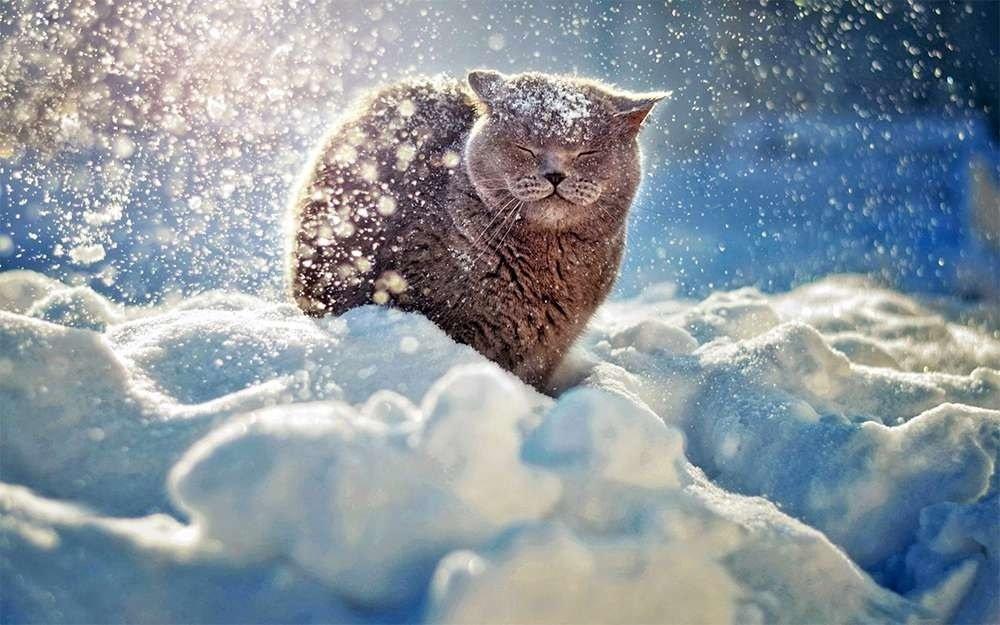 Зима 2021-2022 в Україні буде морозною і сніжною: прогноз погоди від Леоніда Горбаня