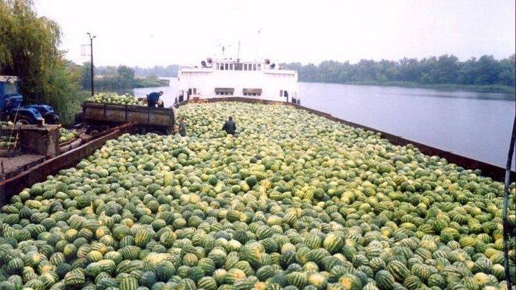 В Киев отправили вторую баржу с херсонскими арбузами: что будет с ценами на бахчевые