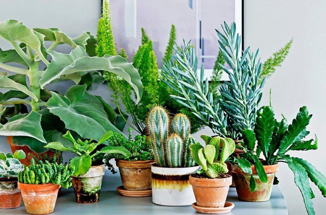 П'ять кімнатних рослин, які не потребують частого поливу
