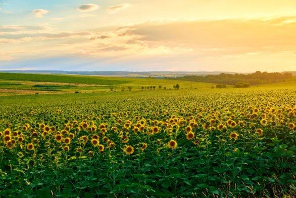 Земля в Украине за пять лет подорожает еще на 20%: названа стоимость участков, на которые будет расти спрос - today.ua