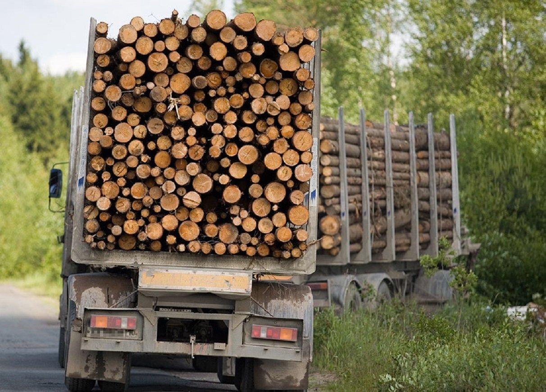 Українцям погрожують санкціями за відмову скасувати мораторій на експорт лісу