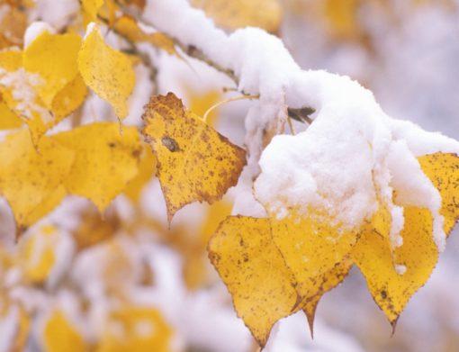 Снегопады начнутся в октябре: Укргидрометцентр прогнозирует холодную осень в Украине - today.ua